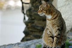 Le chat de Cadaquès